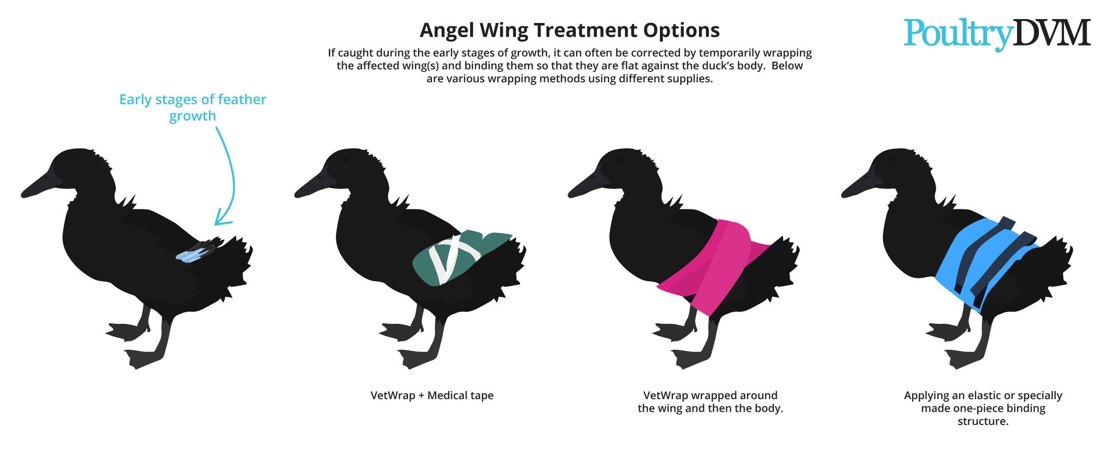 How to fix angel wing in ducks
